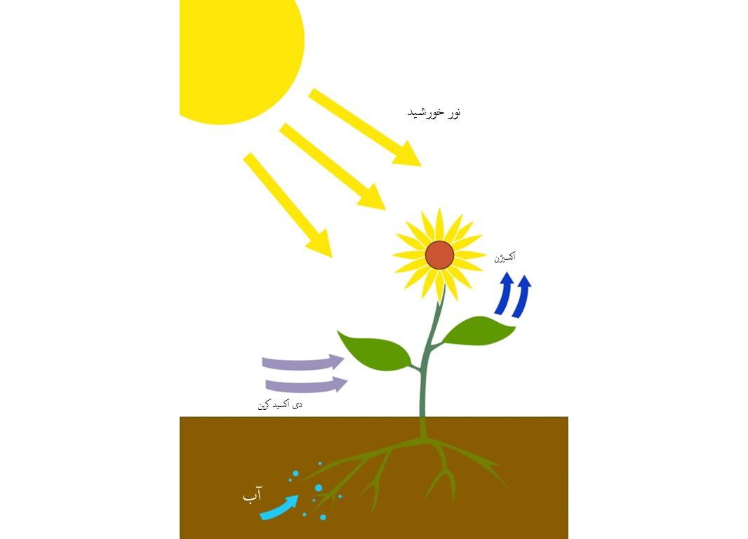 نور رشد گیاه چیست