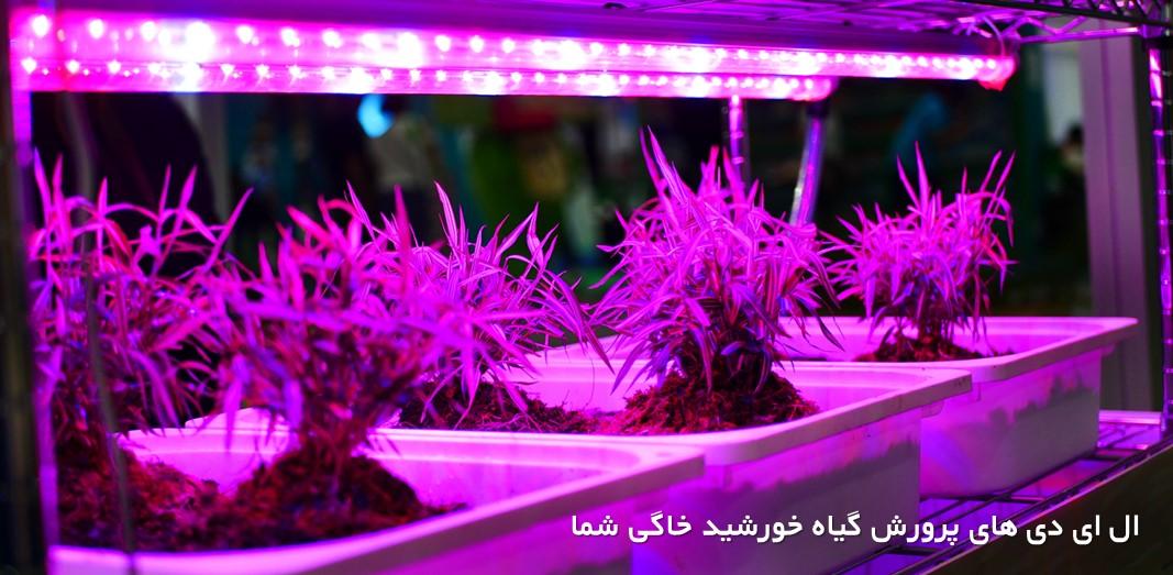 ال ای دی پرورش گیاه